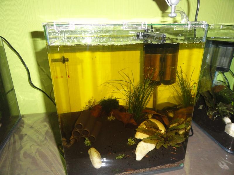 Présentation de mes aquas Dsc09212
