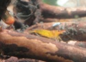 Mon projet shrimp room 1111