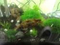 Mon projet shrimp room 311