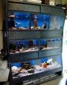 Mon projet shrimp room T2ec1610