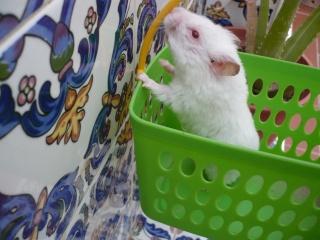 mundo  hamster