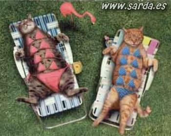 Imagenes graciosas - Página 3 Gatos-10