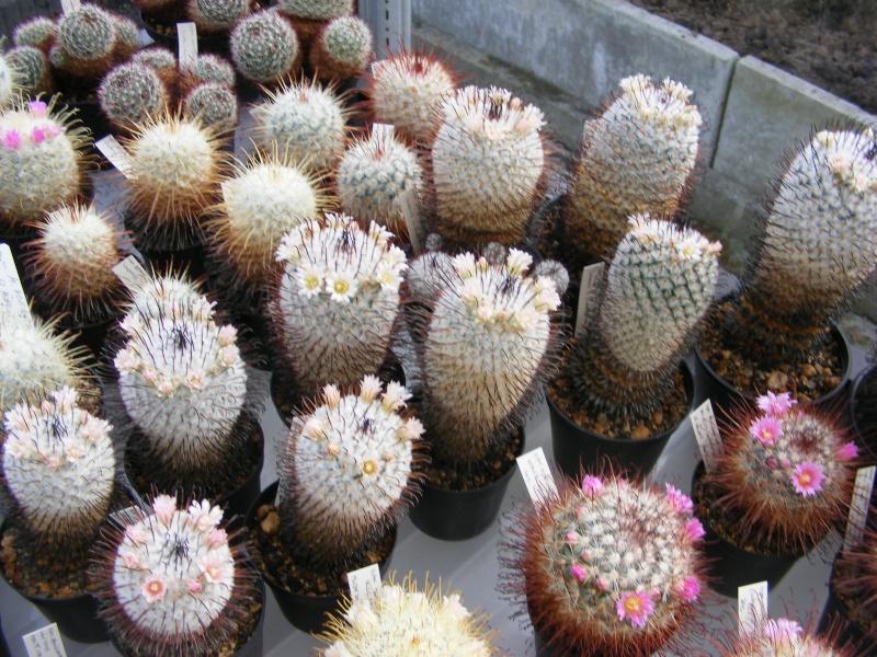 in full flower Dscf0015