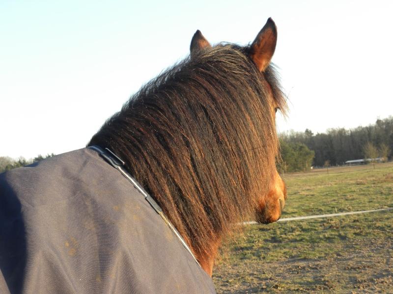 Couverture imperméable pour cheval pas en état? Help! Dscn0210