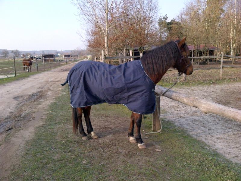 Couverture imperméable pour cheval pas en état? Help! Img-2010