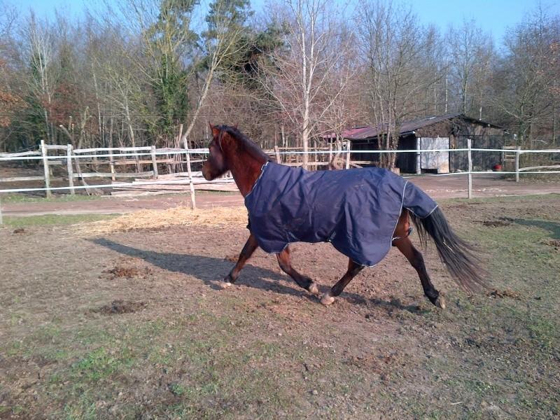 Couverture imperméable pour cheval pas en état? Help! Img-2012