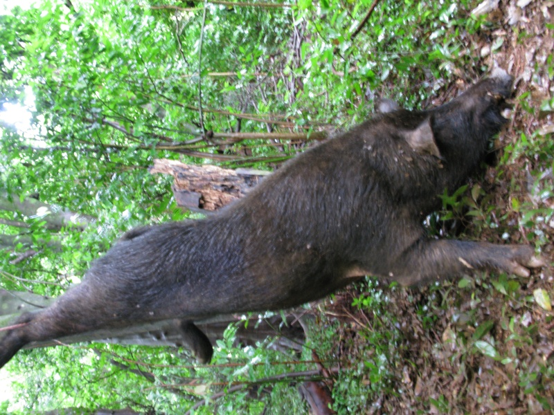 BOWHUNTING PIC GALLERY.......... - Page 5 Img_0115