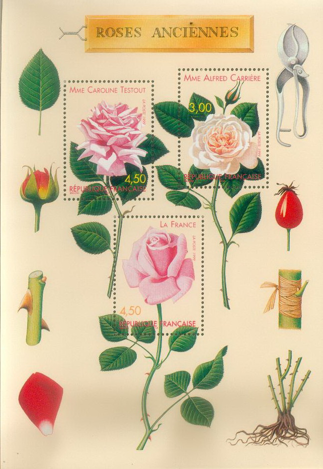 Roses de nos jardins Planch10