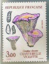 Les champignons timbrés Timbre13