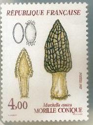 Les champignons timbrés Timbre14