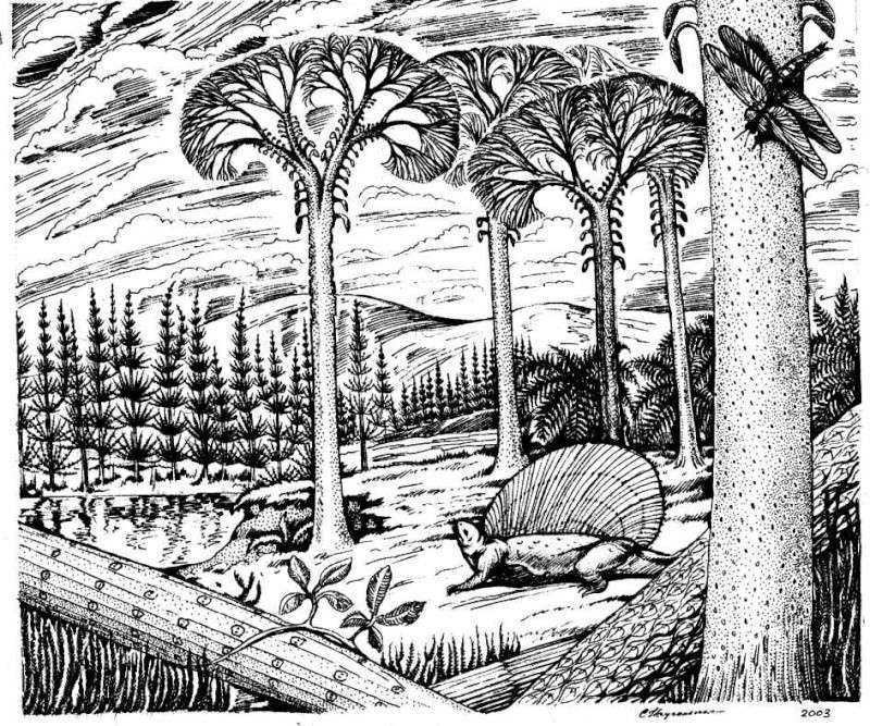 Bothrodendron Lindley et Hutton ,1833. Bothro10