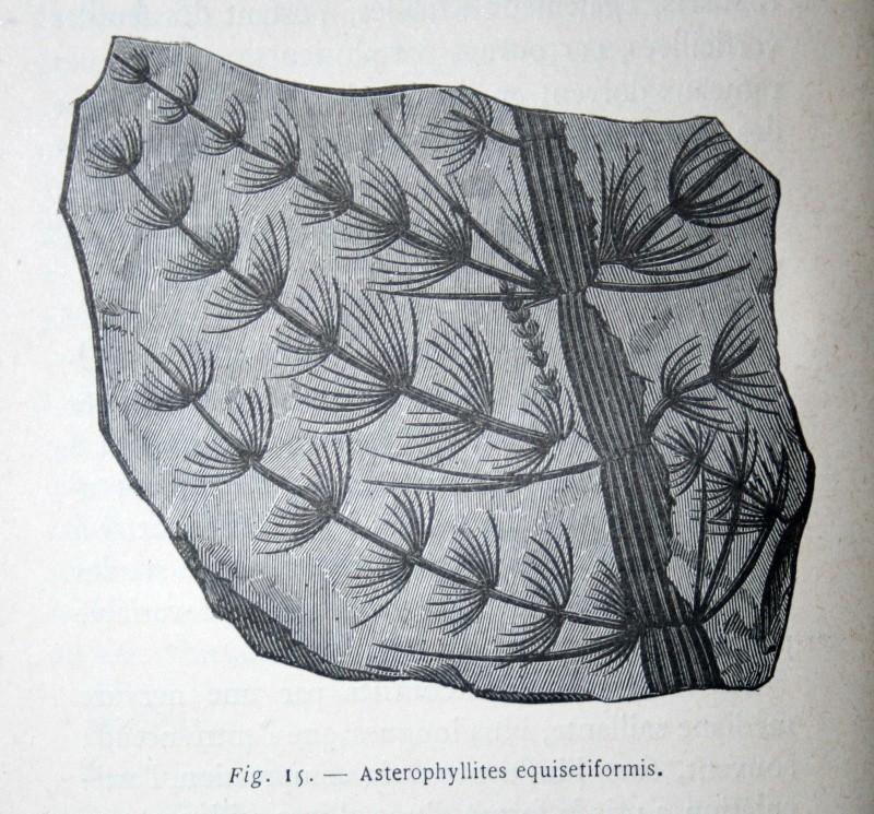 Bibliographie et sites web sur la  paléobotanique Img_0613