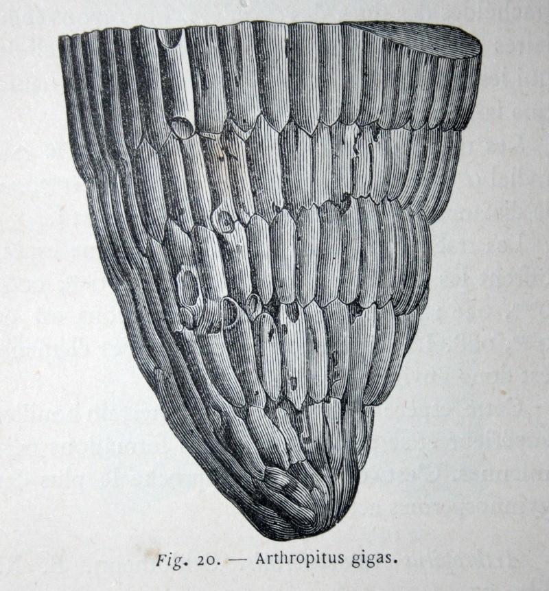 Bibliographie et sites web sur la  paléobotanique Img_0616
