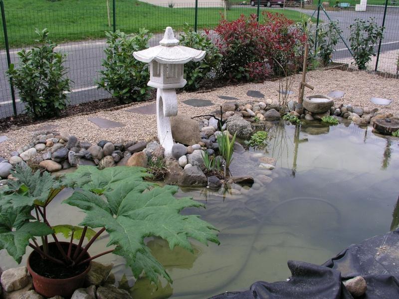Evolution de mon étang au fil des années P1010016
