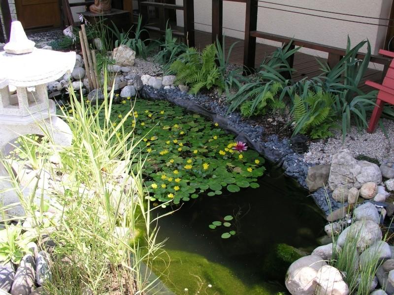 Evolution de mon étang au fil des années P1010017