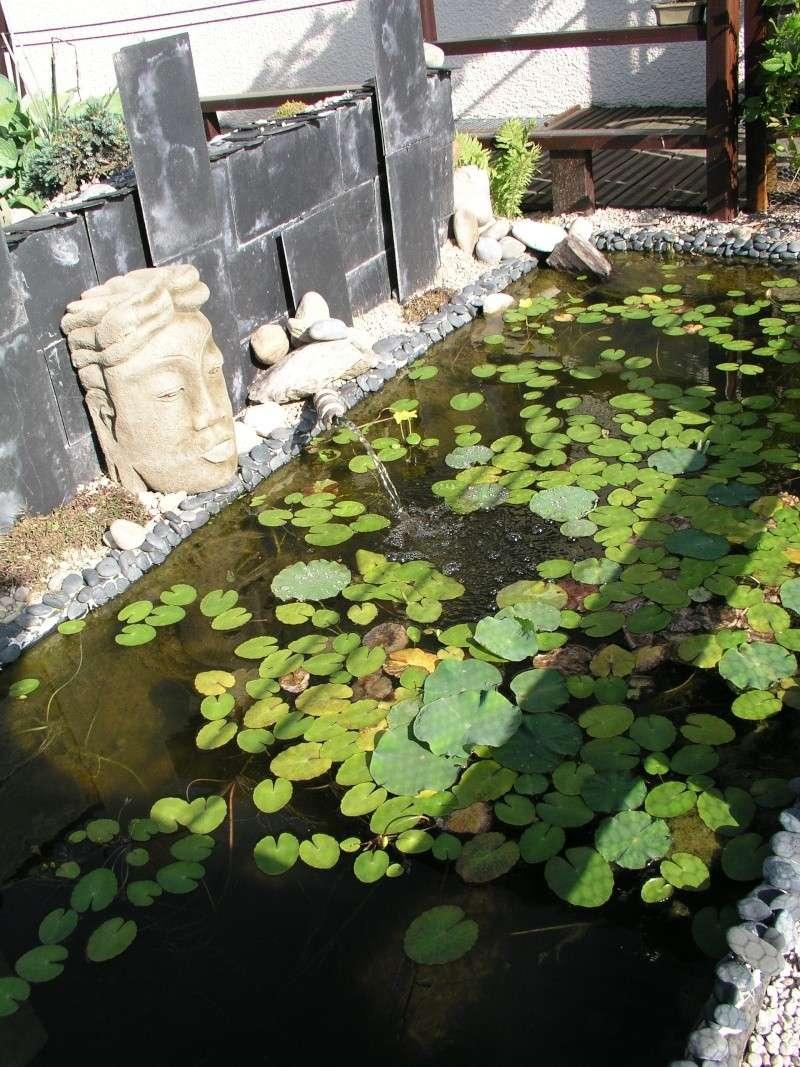 Evolution de mon étang au fil des années P1010020
