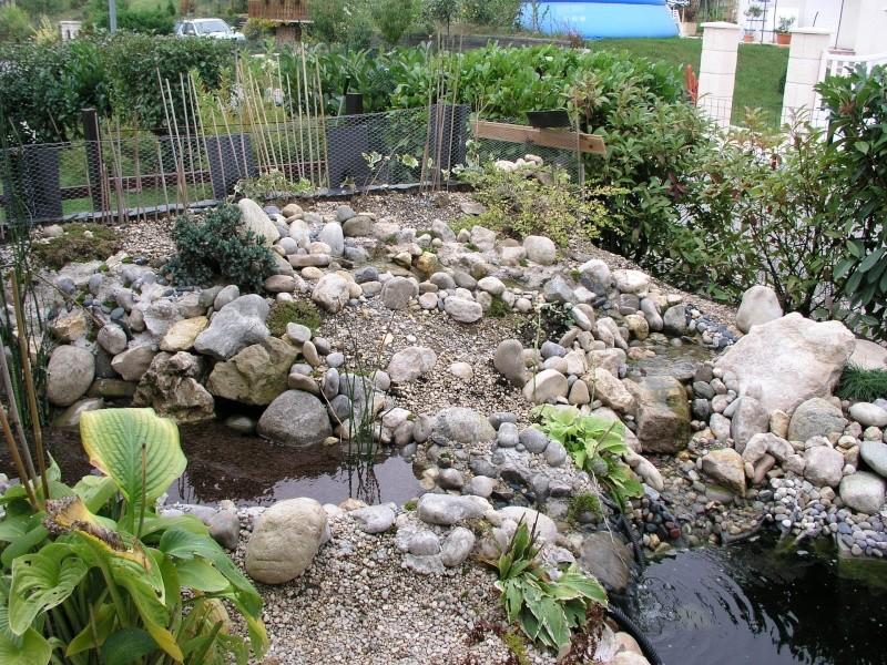 Evolution de mon étang au fil des années P1010410