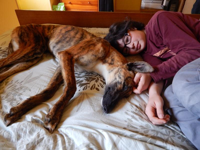 Mirra galga à l'adoption  Scooby France Adoptée  - Page 6 Dscn1213
