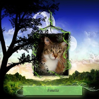 Finette - née 12/2010  Funny_10