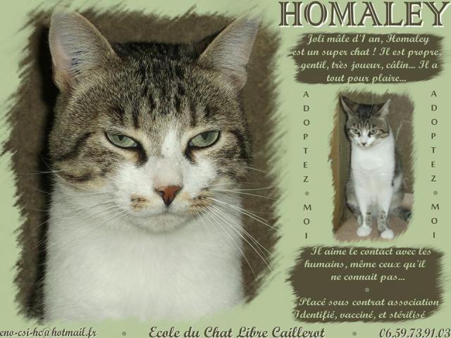 HOMALEY - blanc/tigré - né 12/2012 Homale10
