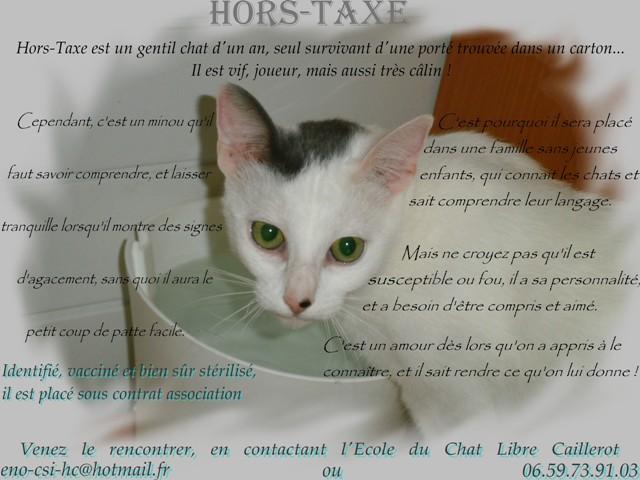 HORS TAXE - blanc - né 10/2012 Hors-t10
