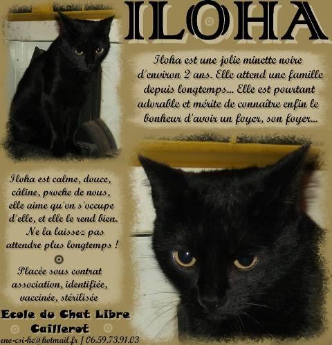 ILOHA - noire - née fin 2011 Iloha10