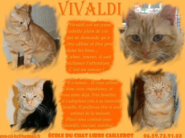VIVALDI - roux - environ 18 mois Vivald10