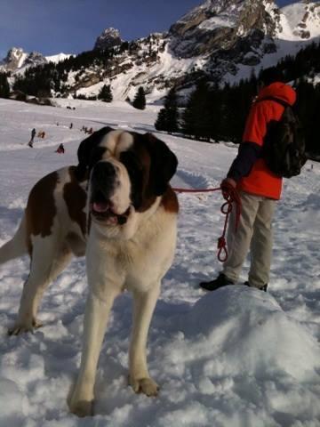 Elmer 4 ans / jaar Rhone Alpes  Anne_m10