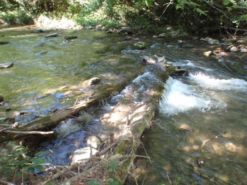truite de l'Aude - Page 3 P8060510