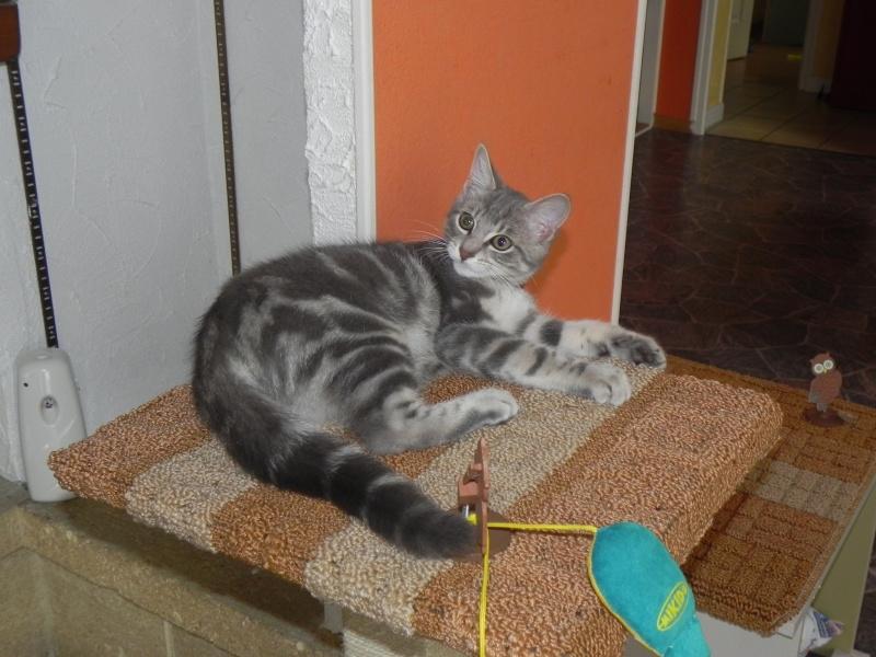 Félix 6 mois et demi 00811