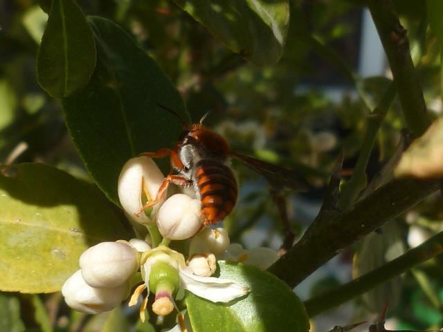 abeilles - Page 2 Abeill11