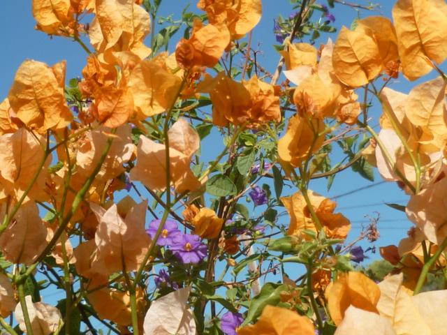 bouquets déshydratés Bougai14
