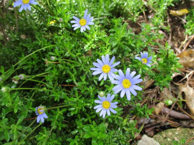 Douceurs jardinières Brugma29