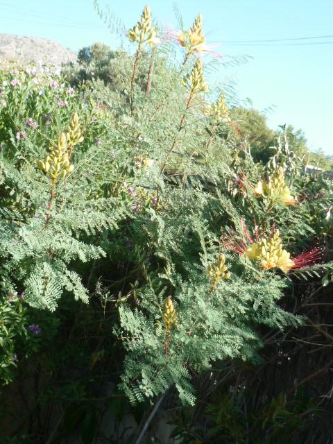 chaleureuses floraisons Caesal10