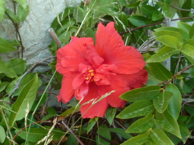 chaleureuses floraisons Caesal11