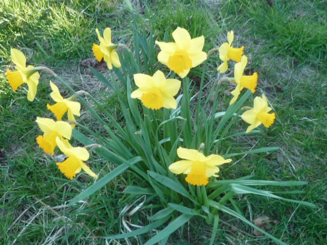 Brassées fleuries - Page 2 Creuse11