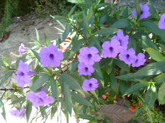 chaleureuses floraisons Divers24