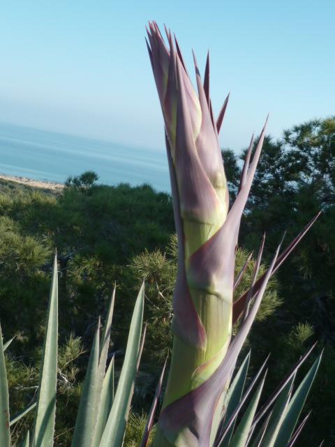 flore du littoral : plages, dunes, vases et rochers maritimes - Page 7 Dunes_12
