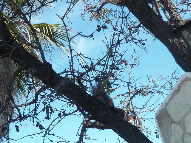 écureuil en visite journaliere - Page 2 Ecureu13