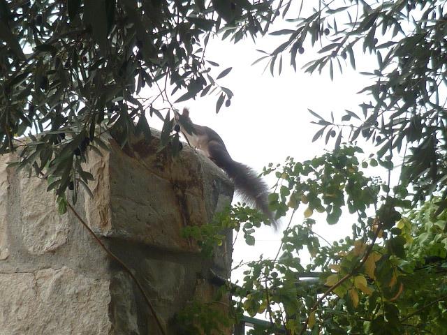 écureuil en visite journaliere - Page 2 Ecureu15