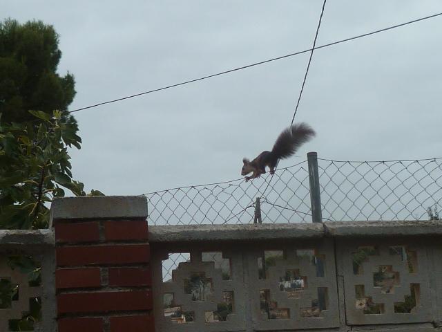 écureuil en visite journaliere - Page 2 Ecureu19