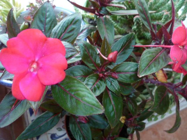 Brumes de fleurs Epine_13