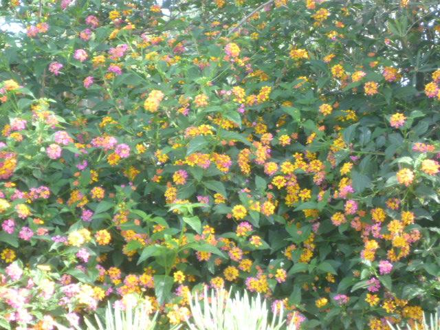 cueillettes ensoleillées - Page 2 Fleurs10