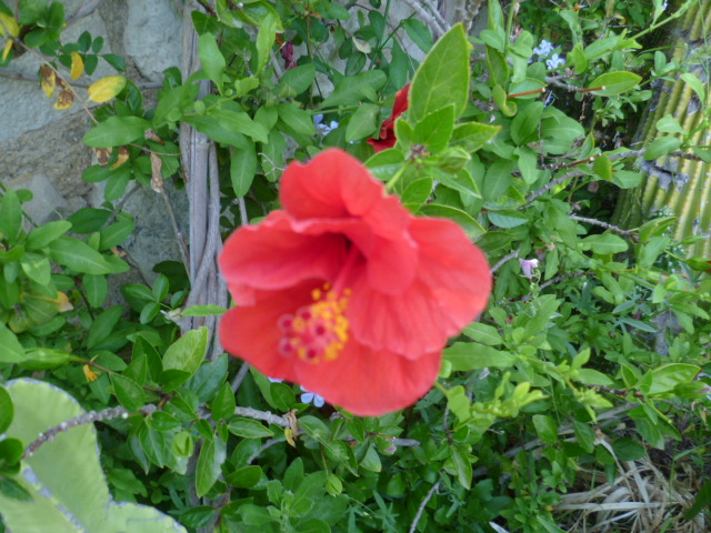 cueillettes ensoleillées - Page 2 Fleurs12