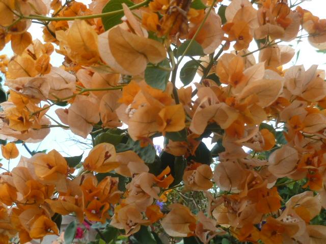 Panier de fin d'année Fleurs18