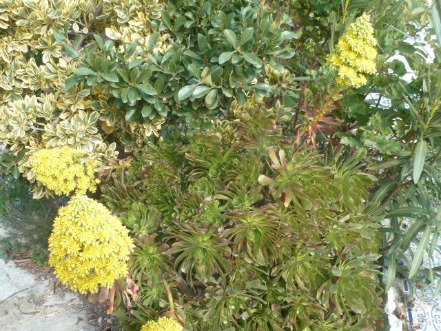 Jardins d'hiver Fleurs30
