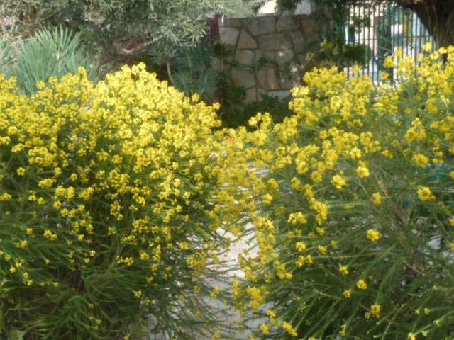 Jardins d'hiver Fleurs31