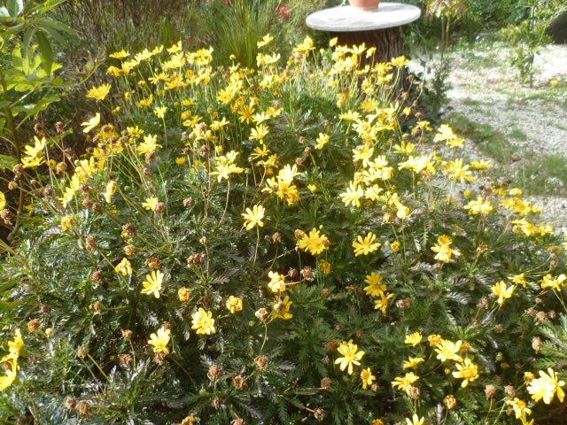 Jardins d'hiver Fleurs33