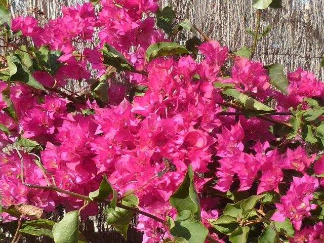 Brumes de fleurs - Page 3 Florai11