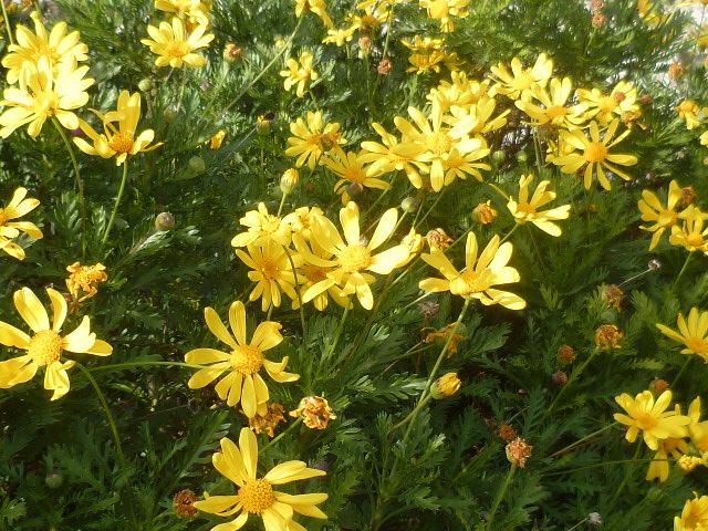 Brumes de fleurs - Page 3 Florai12